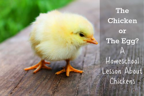chicken or the egg homeschool lesson