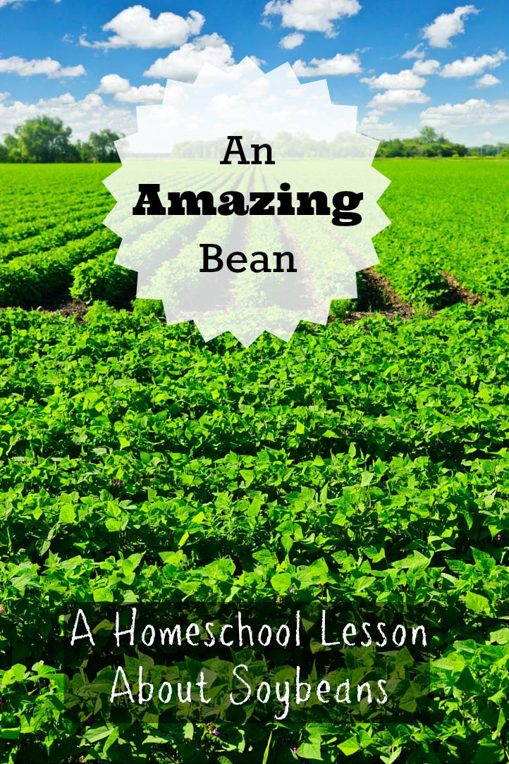 Homeschool Lesson Soybeans