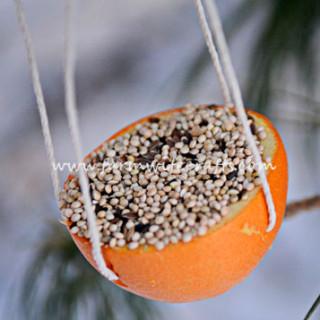 Orange Bird Feeder