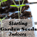 Starting Garden Seeds Indoors